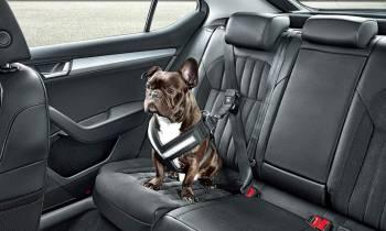 Mascotaxi: el servicio que permite trasladar a tus mascotas en taxi