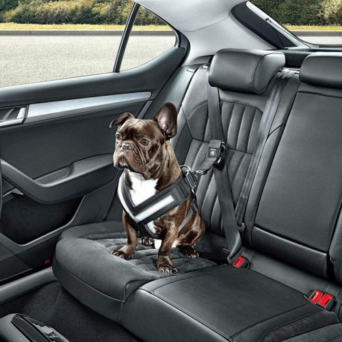 Cómo viajar con mascotas, las mejores ideas