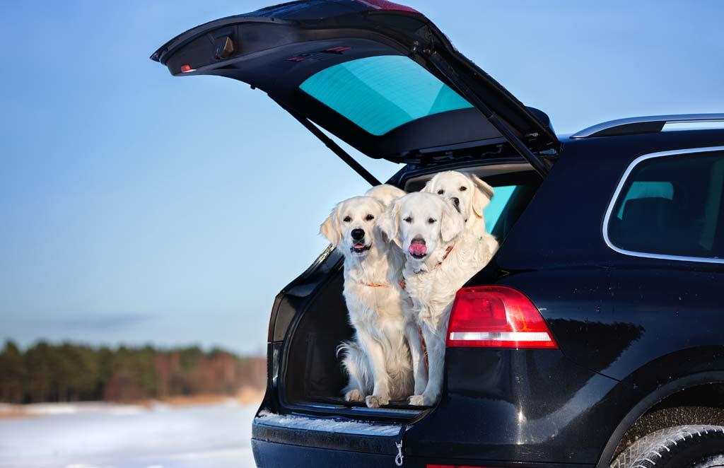 Viajar en coche con perro