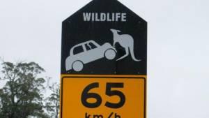 Las señales de tráfico más locas del planeta (fotos)