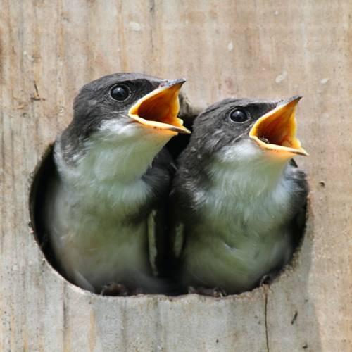 El canto de los pájaros ha cambiado por culpa del tráfico
