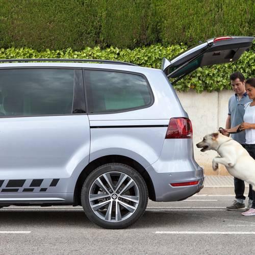 En vacaciones, viaja con tu mascota en el coche