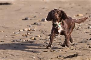 3. Perros y resto de caninos