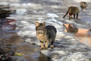 7. Gatos