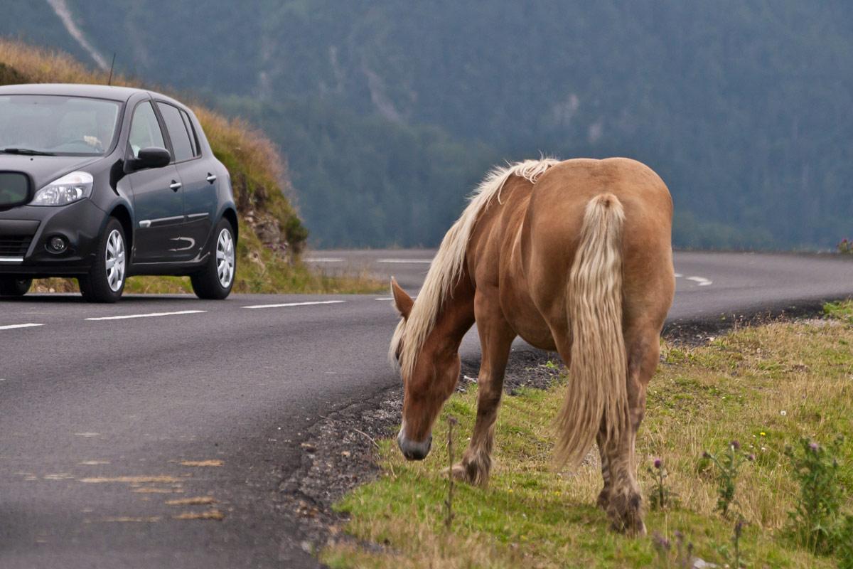 Los jabalíes, detrás del 35,5 % de los accidentes causados por animales