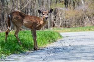 Recomendaciones para evitar accidentes con animales