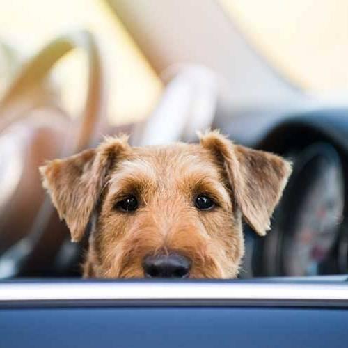 Así debes planificar los viajes en coche con tu perro