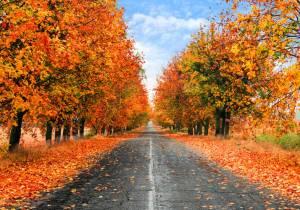 Atento, así hay que comportarse cuanto te encuentras hojas en la carretera