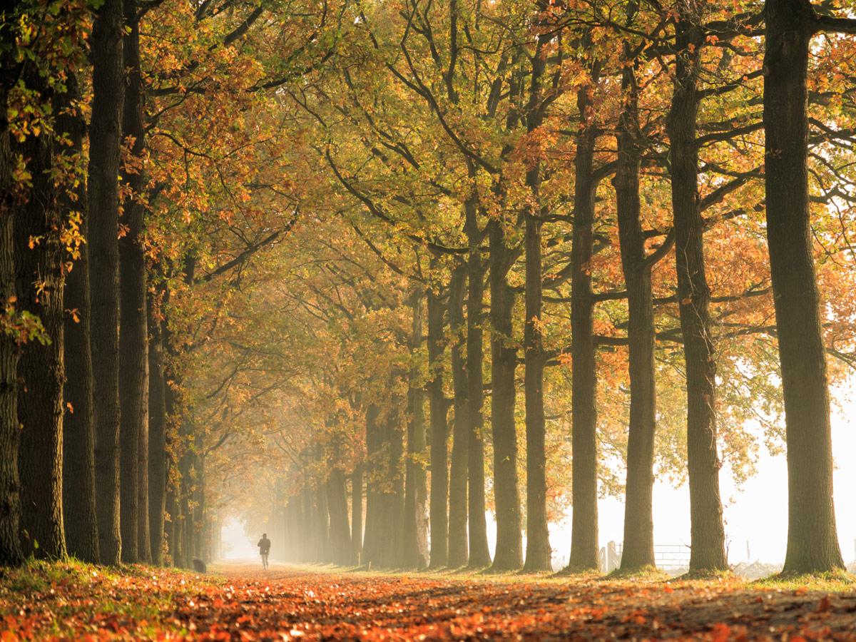 Conducir hojas en carretera