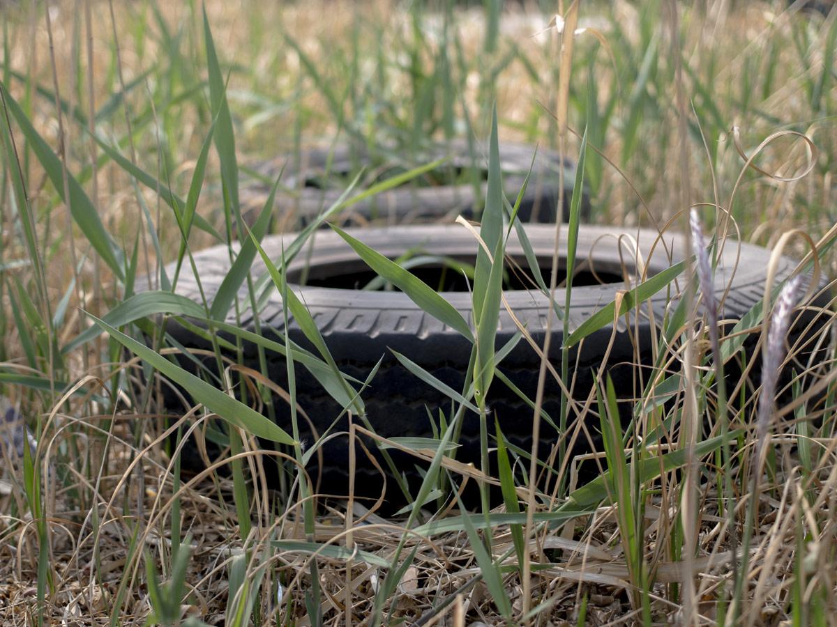Neumáticos Signus