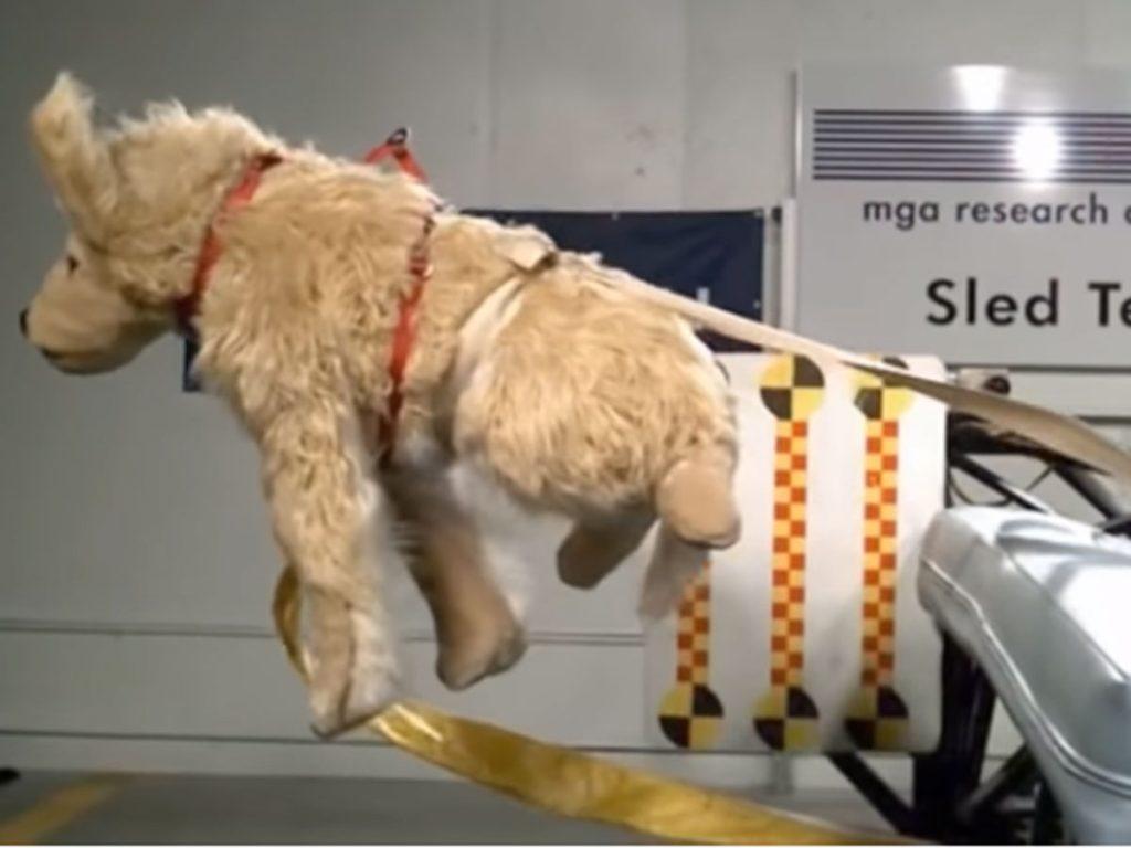 Sistemas seguridad mascotas